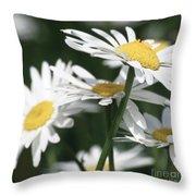 Marguerite Blossom Throw Pillow