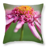 Marguerite Daisy Named Summer Song Rose Throw Pillow