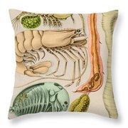 Marine Fauna Throw Pillow