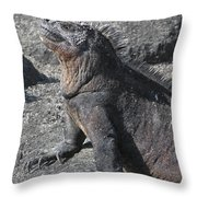Marine Iguana  Amblyrhynchus Cristatus Throw Pillow