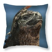 Marine Iguana And Lava Lizard Throw Pillow