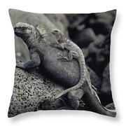 Marine Iguanas Galapagos Islands Throw Pillow