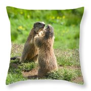 Marmots Throw Pillow