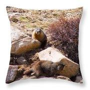 Marmots On Mount Evans Throw Pillow