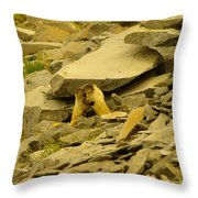 Marmots Playing Throw Pillow