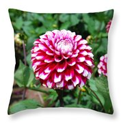 Maroon And White Flower Throw Pillow