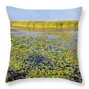 Marsh At Edge Of Lake Okeechobee Throw Pillow