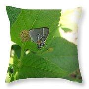 Martial Scrub Hairstreak Butterfly Throw Pillow