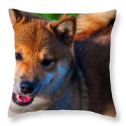 Marvel. Shiba Inu Breed Throw Pillow