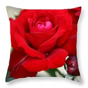 Marvelous Red Rose Throw Pillow