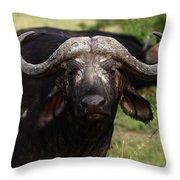 Masai Mara Buffalo Throw Pillow