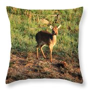 Masai Mara Dikdik Deer Throw Pillow