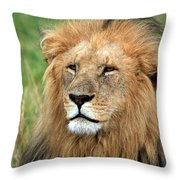 Masai Mara Lion Portrait    Throw Pillow by Aidan Moran