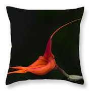 Masdevallia Orchid II Throw Pillow