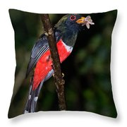 Masked Trogon With Moth Throw Pillow