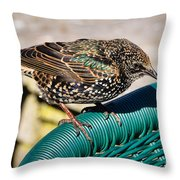 Matching Colours Throw Pillow