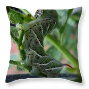 'mater Bug Throw Pillow