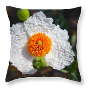 Matilija Poppy Buds And Bloom Throw Pillow