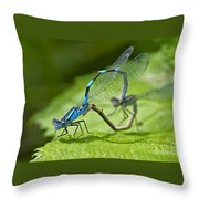 Mating Damselflies Throw Pillow