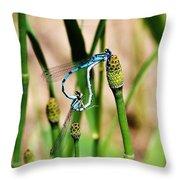 Mating Dragonflies Throw Pillow