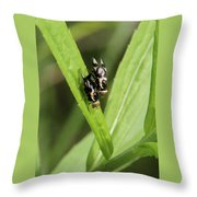 Mating Fruit Flies Throw Pillow