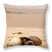 Mating Hookers Sealions Taking A Nap On Beach Throw Pillow