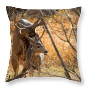 Mating Mulies Throw Pillow