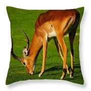 Mature Male Impala On A Lawn Throw Pillow