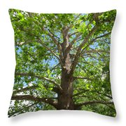 Mature Sycamore Throw Pillow