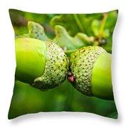 Maturing Acorns Throw Pillow