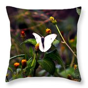 Maui Butterfly Throw Pillow