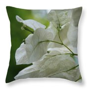 Mauna Kea White Bougainvillea Throw Pillow
