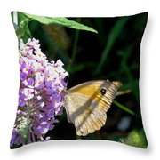 Meadow Brown Butterfly  Throw Pillow