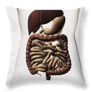 Medical Illustration Showing The Human Throw Pillow by Stocktrek Images