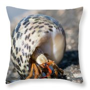 Mediterranean Hermit Crab Throw Pillow