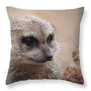 Meerkat 7 Throw Pillow by Ernie Echols