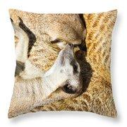 Meerkat Group Resting Throw Pillow