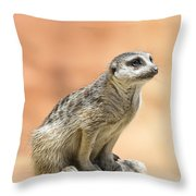 Meerkat Manor V4 Throw Pillow