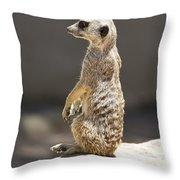 Meerkat Manor V5 Throw Pillow