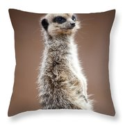 Meerkat Portrait Throw Pillow