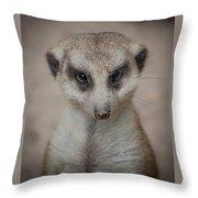 Meerkat Stare-down Throw Pillow