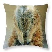 Meerkat Suricata Suricatta Throw Pillow