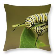 Meeting In The Middle - Monarch Caterpillars Throw Pillow