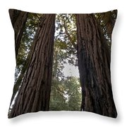 Meeting Of The Sequoias Throw Pillow