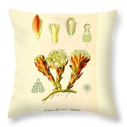 Melera Throw Pillow