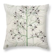 Melia Azedarach From 'phytographie Medicale' By Joseph Roques Throw Pillow