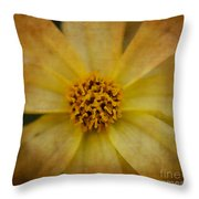 Mellow Yellow  2 Throw Pillow