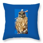 Merlin Falcon Throw Pillow