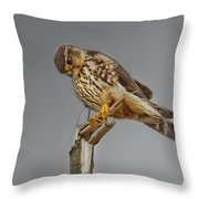 Merlin Falcon Searching For Prey Throw Pillow