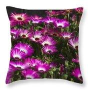 Mesembryanthemums 3 Throw Pillow